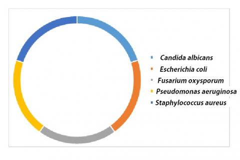 Species most commonly used in the evaluation of antimicrobial activities