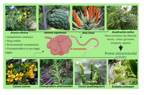 Plants or plant extracts that can be used as potential drug candidates for treatment of nematodes