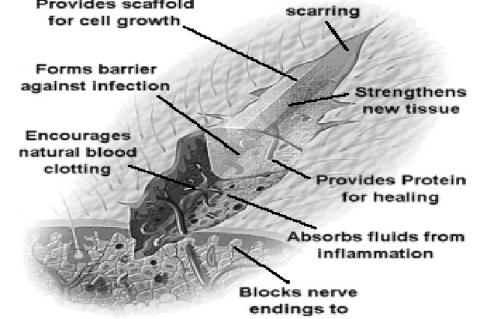 Etiology of Wound Healing