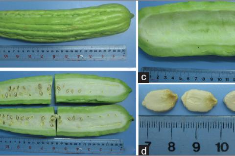 Fruit of Momordica charantia (a) external morphology, (b) cut surface, (c) pericarp, and (d) seeds