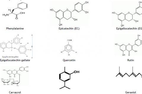 Epicatechin (EC)