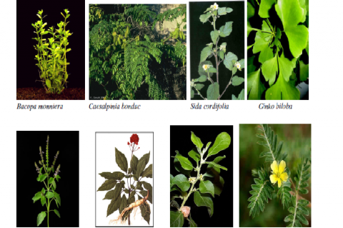 Plants reported to possess anti-stress effects