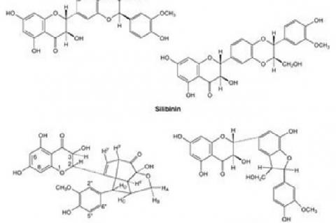 The three structural components of silymarin: silibinin, silydianine, and silychristine