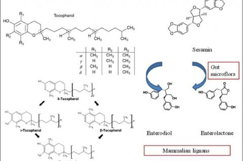 Structures of lignans: Sesamin, sesamolin and tocopherol homologues