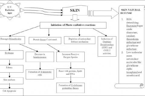 Mechanism of photoreactions