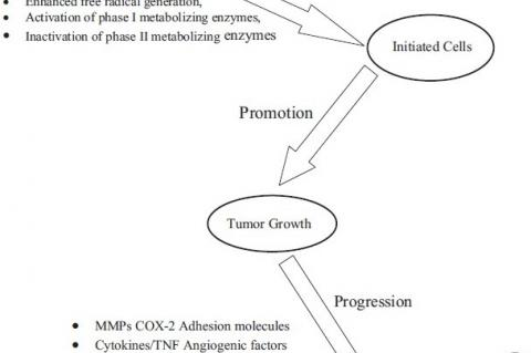 Three stages of cancer development and progression