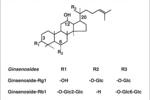 Ginsenoside Rb1 and Rg1 from Ginkgo Biloba